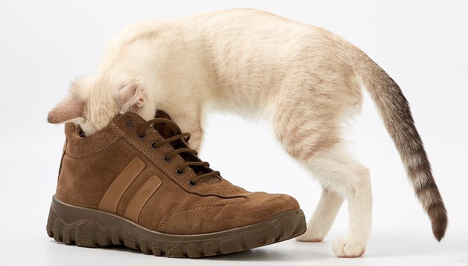 Когда неприятно пахнет обувь, это замечаете не только вы, но и окружающие.  Что делать, если пара пахнет потом  Бесконечно покупать новую  5338553696a